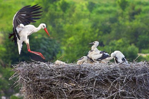 Birdwatching 20: Jak přispět vědě