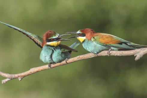 Birdwatching 23: Jaro ožívá!