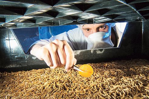 Hmyz k obědu: Revoluce na talíři