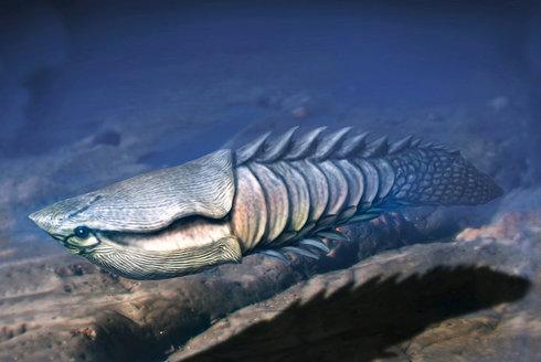 Mělké moře: Kolébka prvních ryb