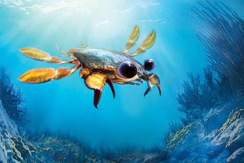 Chiméra s klepety: Co dělá kraba krabem?