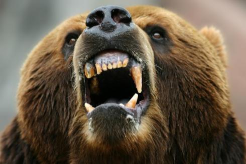 Pes versus medvěd: Nikdy neštvěte medvědy!