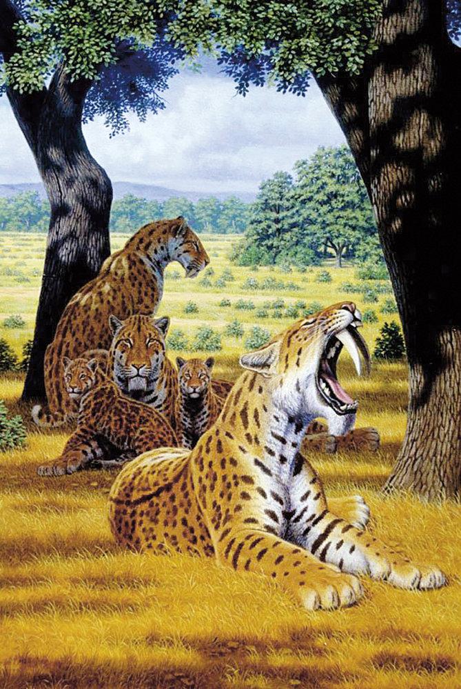 tygr tygr pomalu datování