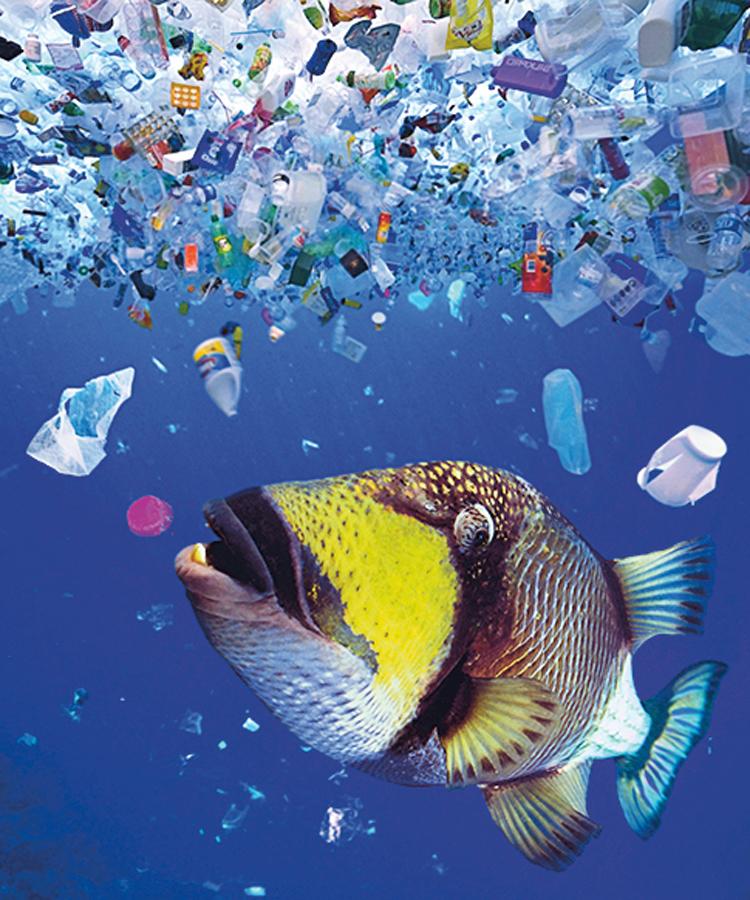 Oceány plné plastů: Dokážeme je vyčistit? | Ábíčko.cz