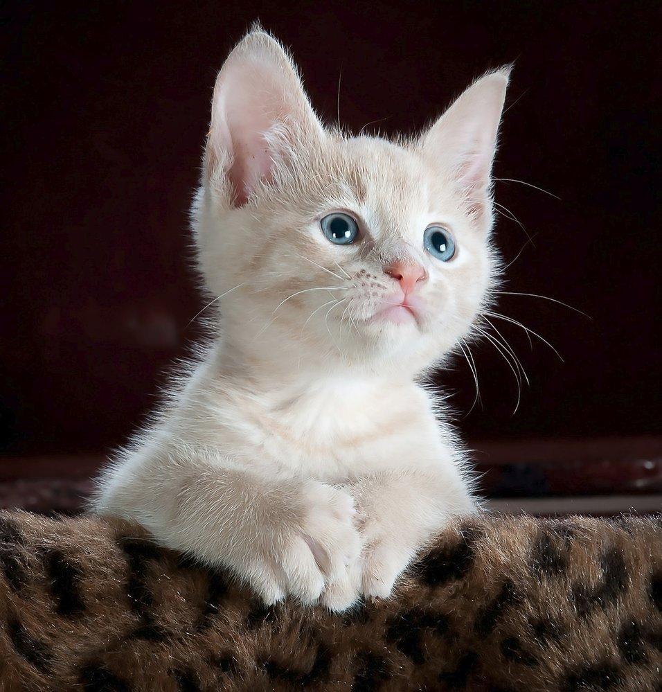 Těsné asijské kočička vids
