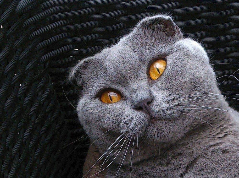 sledujte tu kočičí stříkat