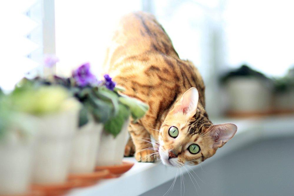 Velká kočička vidoes