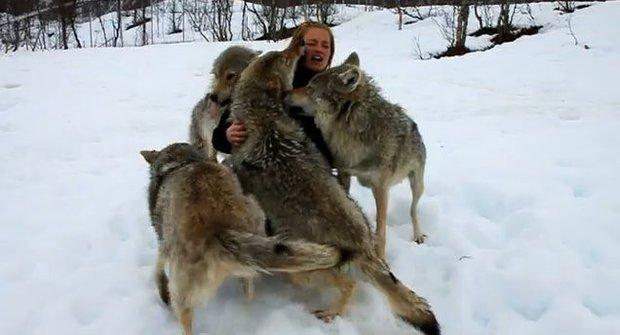 Tanec s vlky: Smečka vítá ošetřovatelku