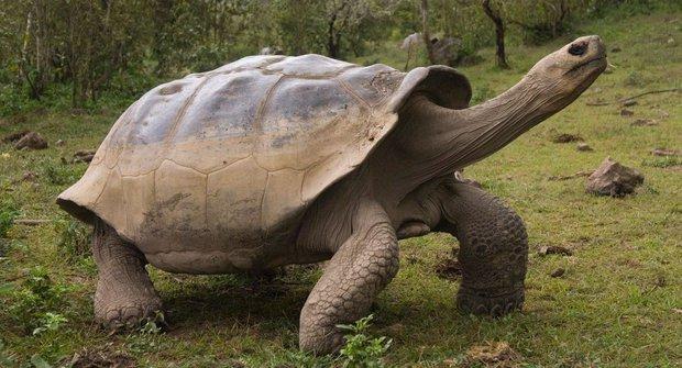 Příběhy vyhynulých zvířat: Želvy sloní
