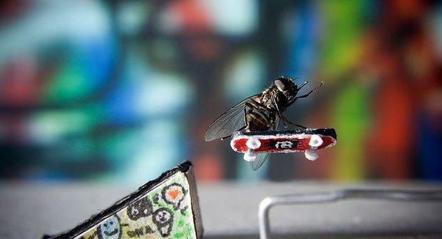 Úžasná dobrodružství pana Moušáka aneb Co dokáže (ne)obyčejná moucha?