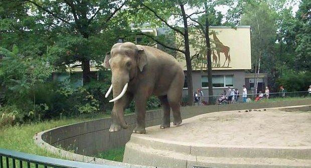 Krutá příroda i realita: Fotograf schytal gigantickou sloní nálož