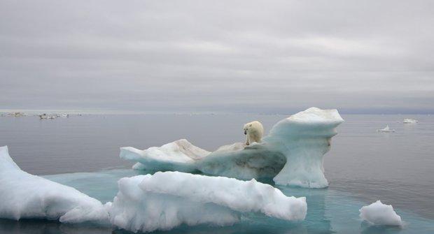 ABC 24/2012 Živá Arktida: Zvířata pod půlnočním sluncem