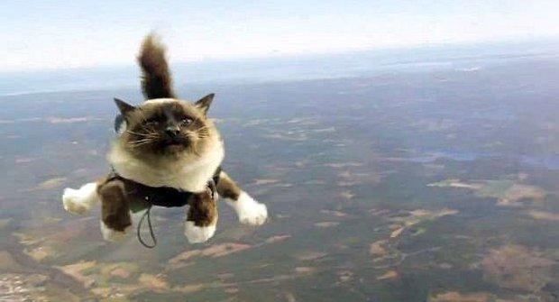 Úlet! Kočky skáčou s padákem