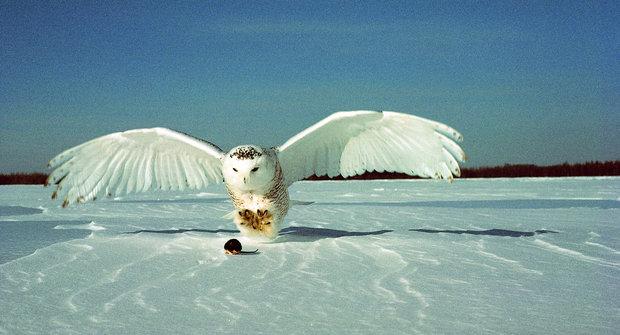 Sovice sněžná: Než poprvé vzlétne