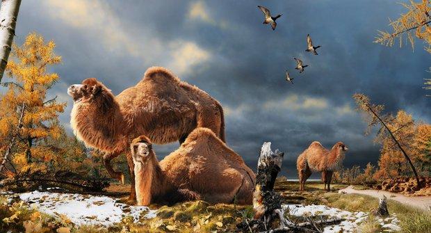 Obří velbloud z Arktidy