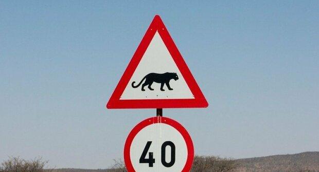 Pozor na...! Zoo na dopravních značkách