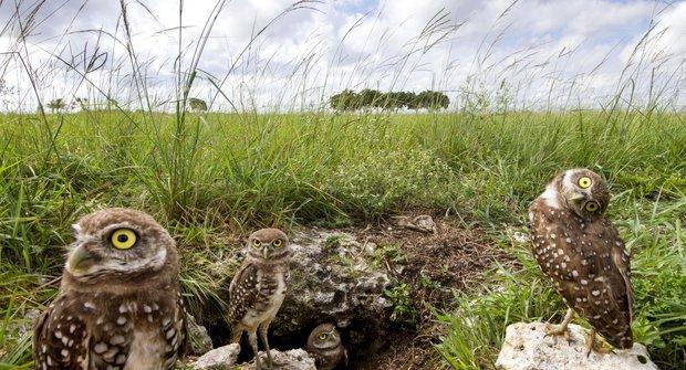 Opeřený králík z podzemní nory