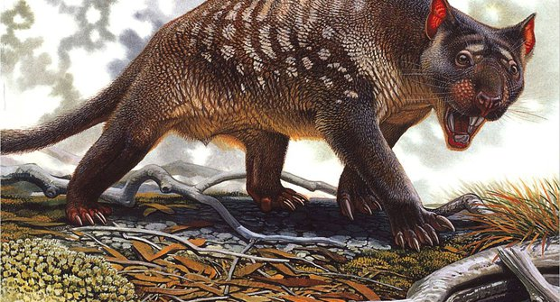 Co zabilo megafaunu? Kupodivu ne člověk