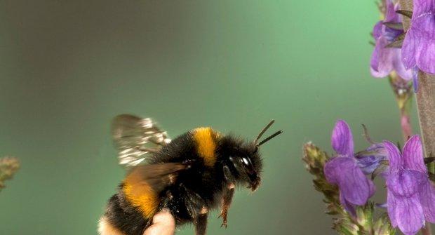 Pijáci nektaru: Spolupráce rostlin a opylovačů