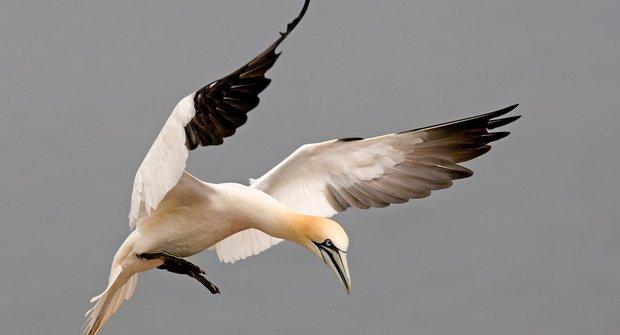 Ptáci bufeťáci: Co vidí terejové na rybářích