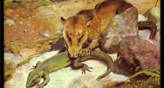 Galerie: Ve stínu dinosaurů