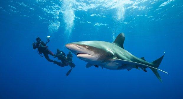 Zubaté osobnosti: Žraloci obávaní i milovaní