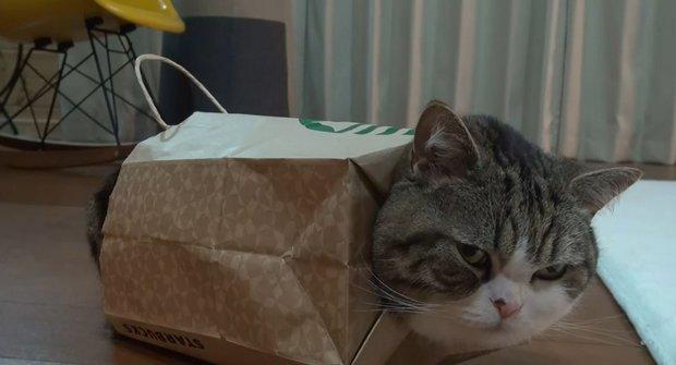 Protože proto: Kočka narvaná v papírové tašce