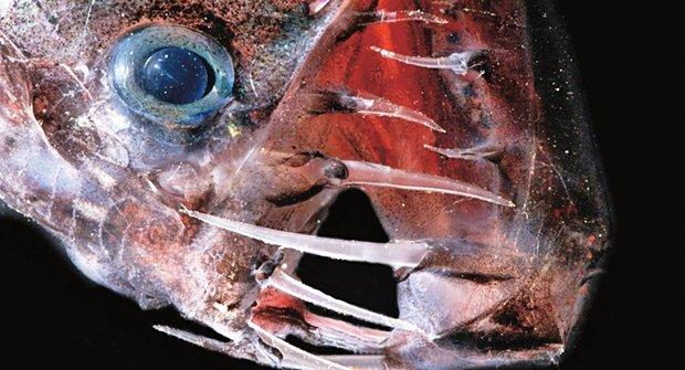 Příšerky z moře: Za mimozemšťany naší planety
