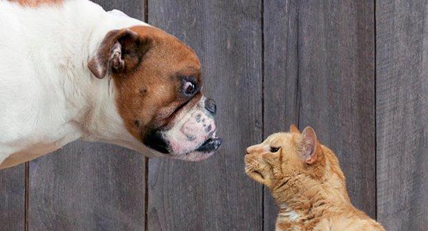 Jak kočky zahubily psy