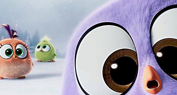 Mini Angry Birds blbnou u vánoční koledy