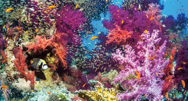 Korály z 3D tiskáren: Vytiskneme si pobřeží?
