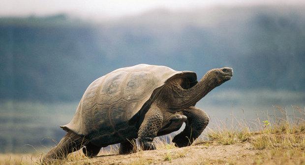 Návrat mrtvých želv: Sopka plná překvapení