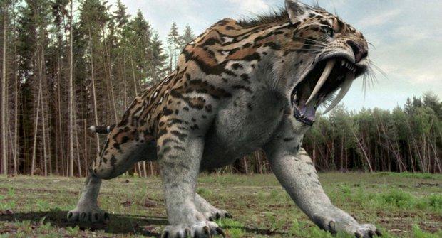 Šavlozubá šelma minulosti i dneška: Smilodon se střetl s indiány
