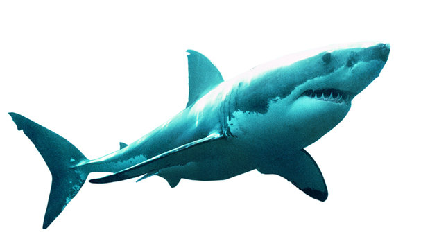 Konec megalodona: Proč vymřel nejděsivější žralok