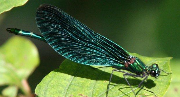 Z vody do vzduchu: Vážky a šídla frčí!