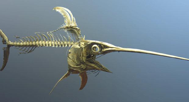 Mečoun: Ryba s meči a oštěpy