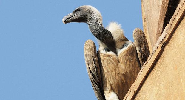 Vejce špionem: Jak odhalit tajemství supího hnízda