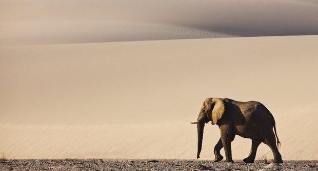 Krutá Namib: Domov pouštních slonů