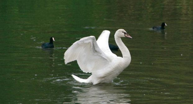 Birdwatching: Jak se pozorují ptáci ve světě