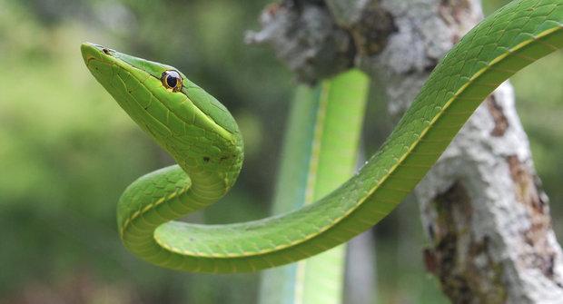 Hadi a jejich neobvyklé smysly