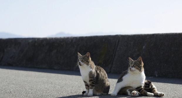 Africká kočička videa