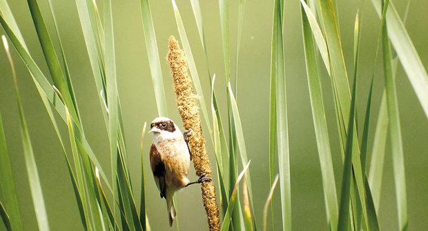 Velké dlouhé ptáky obrázky