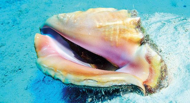 Největší perla: Poklad pod postelí