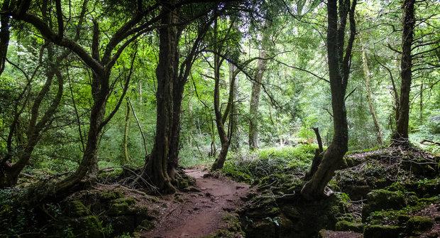Podivuhodná místa #13: Puzzlewood, les z Pána prstenů a Harryho Pottera