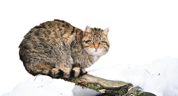 hezké dívky kočička obrázky