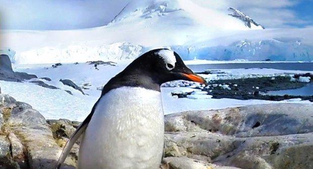 Hurá za tučňáky v 360° videu!