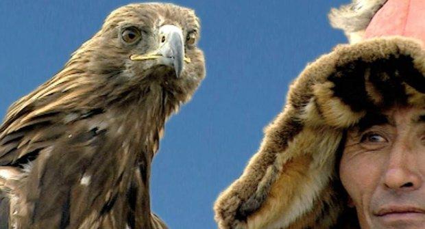 Sokolnictví: Něco málo z historie dravých ptáků