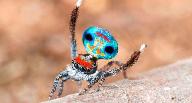 Nejkrásnější pavouci