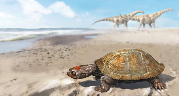 Samozvaná královna: První želva v Evropě