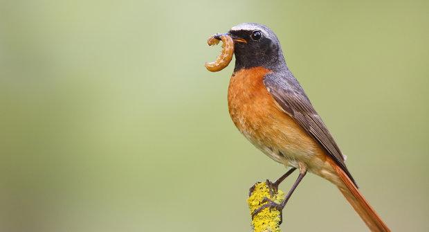ukaž mi nějaké ptáky